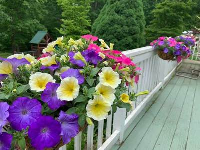 Wave Bemis Custom Pastel Mix Wave Petunia Jumbo 6 pack (reg. 19.99)